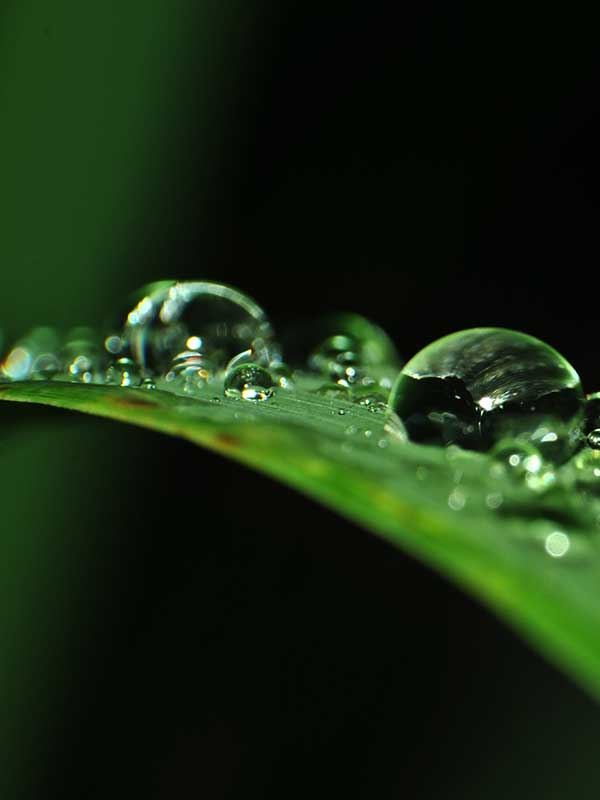 magnigied water on a leaf's edge